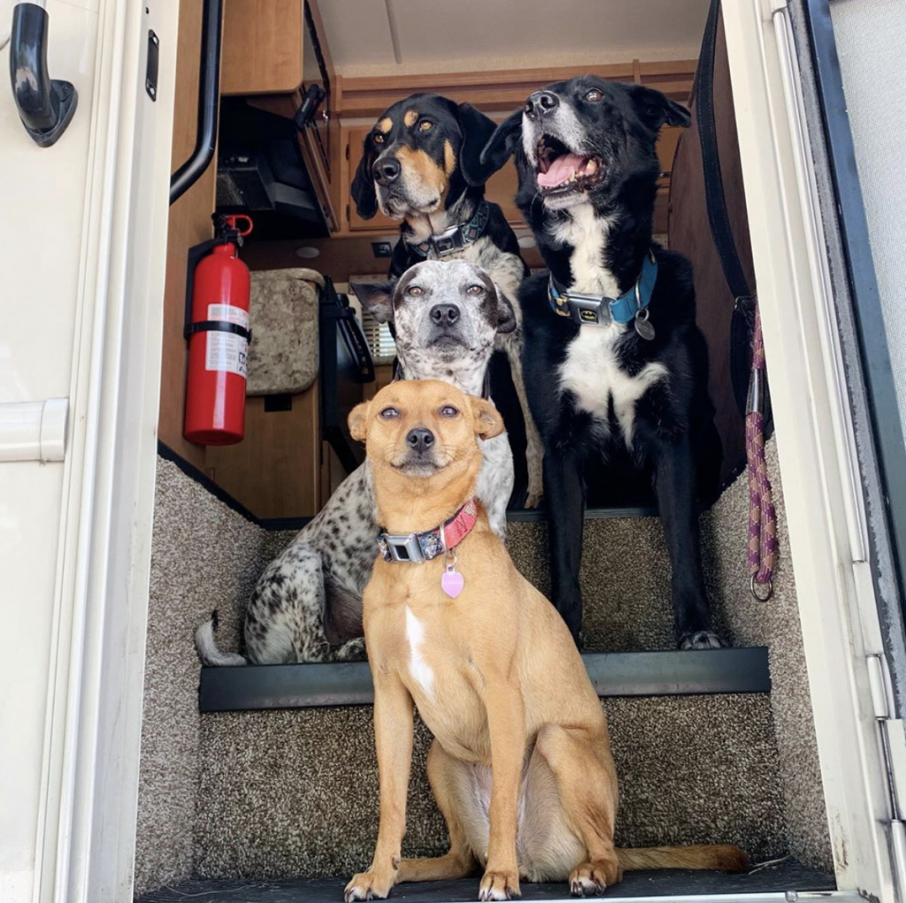 Four dogs sitting on steps of an RV